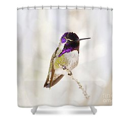 Hummingbird Shower Curtain by Rebecca Margraf