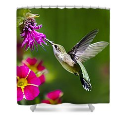 Hummingbird With Flower Shower Curtain by Christina Rollo