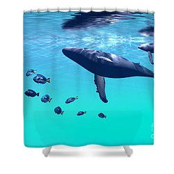 Humpback Whales Shower Curtain by Corey Ford