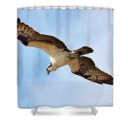 Hunter Osprey Shower Curtain by Carol Groenen