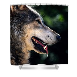 Hunting Wolf Shower Curtain by Martin Newman