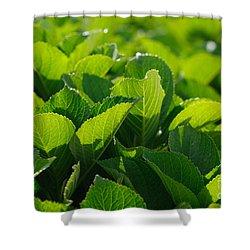 Hydrangea Foliage Shower Curtain by Gaspar Avila