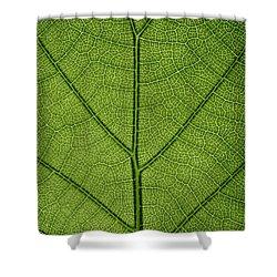 Hydrangea Leaf Shower Curtain by Steve Gadomski