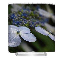 Hydrangea Macrophylla Shower Curtain by Juergen Roth