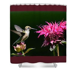 Shower Curtain featuring the photograph I Love My Bee Balm by Rodney Campbell