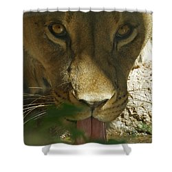 I See You 2 Shower Curtain by Ernie Echols