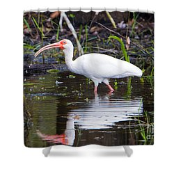 Ibis Drink Shower Curtain by Mike Dawson