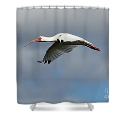 Ibis In Flight Shower Curtain by Carol Groenen
