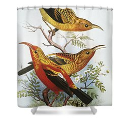 IIwi Shower Curtain by Hawaiian Legacy Archive - Printscapes