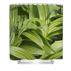 Indian Poke - Veratrum Veride-  Shower Curtain by Erin Paul Donovan