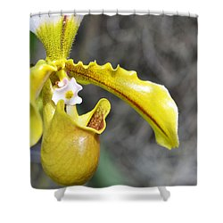 Intimate Orchid 5 - Sharon Cummings Shower Curtain by Sharon Cummings