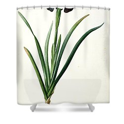 Iris Luxiana Shower Curtain by Pierre Joseph  Redoute