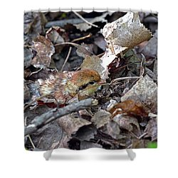 It's A Baby Grouse Shower Curtain by Asbed Iskedjian