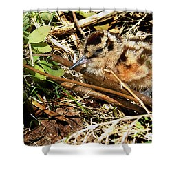 It's A Baby Woodcock Shower Curtain by Asbed Iskedjian
