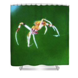 Itsy Bitsy Spider Shower Curtain by Bill Cannon