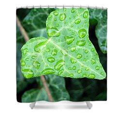 Ivy Leaf Shower Curtain by Michael Peychich