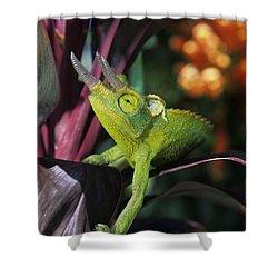 Jacksons Chameleon On Leaf Shower Curtain by Dave Fleetham - Printscapes