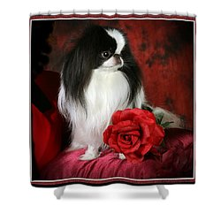 Japanese Chin And Rose Shower Curtain by Kathleen Sepulveda