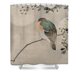 Japanese Silk Painting Of A Wood Pigeon Shower Curtain by Japanese School
