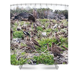 Juveniles Red Footed Boobies Shower Curtain by Jess Kraft