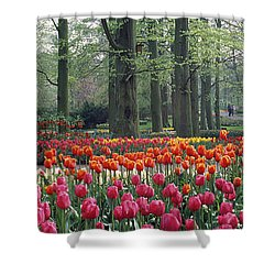 Keukenhof Garden, Lisse, The Netherlands Shower Curtain by Panoramic Images