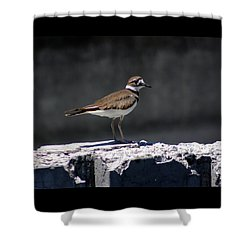 Killdeer Shower Curtain by M Images Fine Art Photography and Artwork