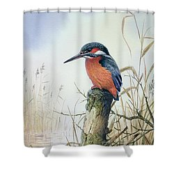 Kingfisher Shower Curtain by Carl Donner