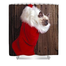 Kitten In Stocking Shower Curtain by Garry Gay