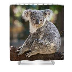 Koala In Tree Shower Curtain by Jamie Pham
