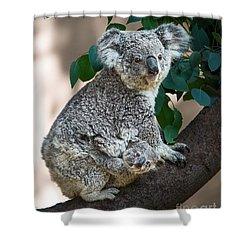 Koala Joey And Mom Shower Curtain by Jamie Pham