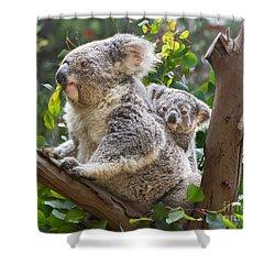 Koala Joey On Mom Shower Curtain by Jamie Pham