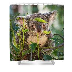 Koala Leaves Shower Curtain by Jamie Pham