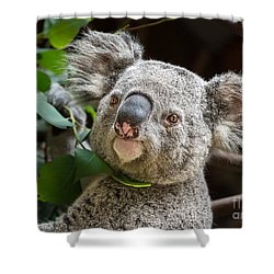 Koala Male Portrait Shower Curtain by Jamie Pham