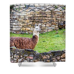 Kuelap Ruins And Llama Shower Curtain by Jess Kraft