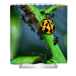 Ladybird And The Ants 2 By Kaye Menner Shower Curtain by Kaye Menner