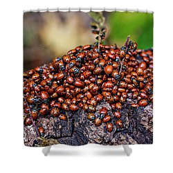 Ladybugs On Branch Shower Curtain by Garry Gay