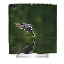 Landing Shower Curtain by Karol Livote