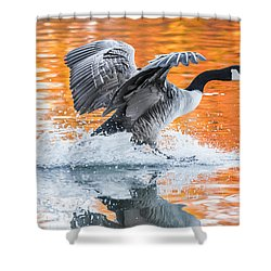 Landing Shower Curtain by Parker Cunningham