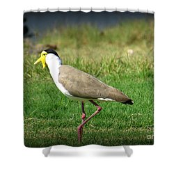 Masked Lapwing Shower Curtain by Evie Hanlon