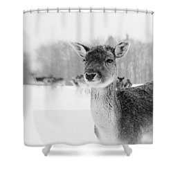 #lensbaby #composerpro #sweet35 Shower Curtain by Mandy Tabatt