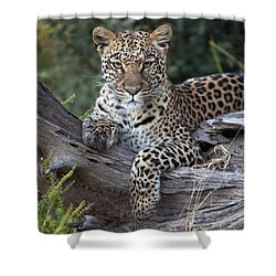 Leopard Panthera Pardus Resting Shower Curtain by Sergey Gorshkov