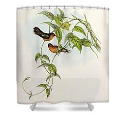 Leucippus Fallax Shower Curtain by John Gould