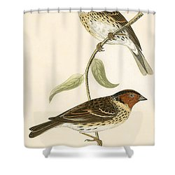Little Bunting Shower Curtain by English School