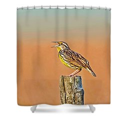 Little Songbird Shower Curtain by HH Photography of Florida
