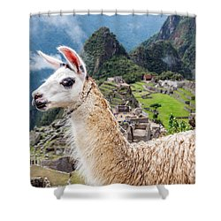 Llama At Machu Picchu Shower Curtain by Jess Kraft