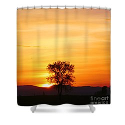 Lone Tree Sunset Shower Curtain by Nick Gustafson