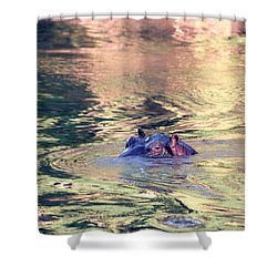 Lonely Hippo Shower Curtain by Sebastian Musial