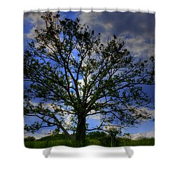 Lonely Tree Shower Curtain by Kevin Hill