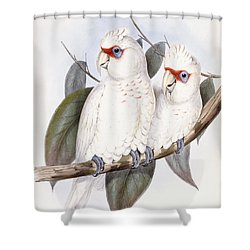 Long-billed Cockatoo Shower Curtain by John Gould