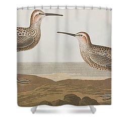 Long-legged Sandpiper Shower Curtain by John James Audubon